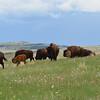 Greenier Pastures