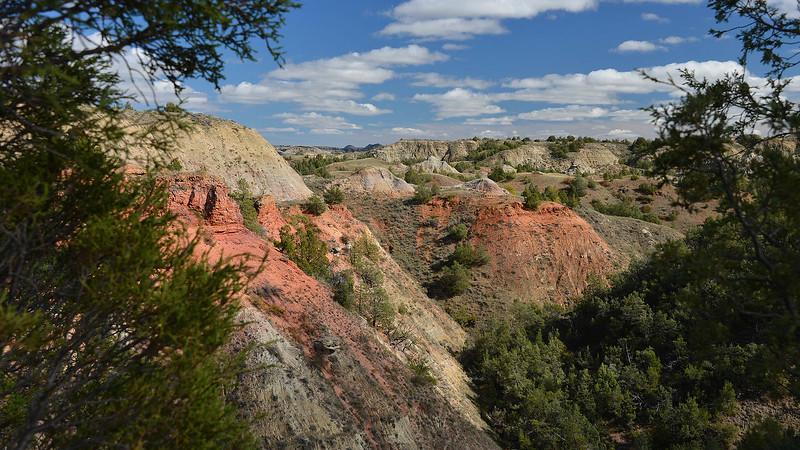 TR's Landscape