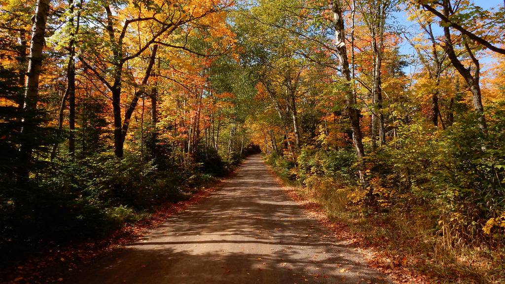 Canopy Road