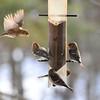 My perch