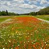 Highway 61 flower gardens
