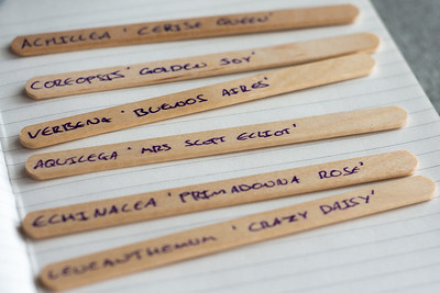 Wooden Sticks with Flower Names