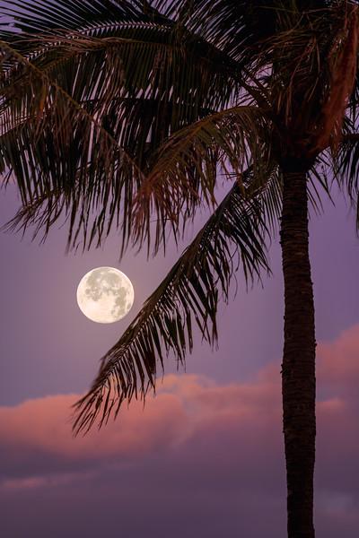 Palm Tree Moonset