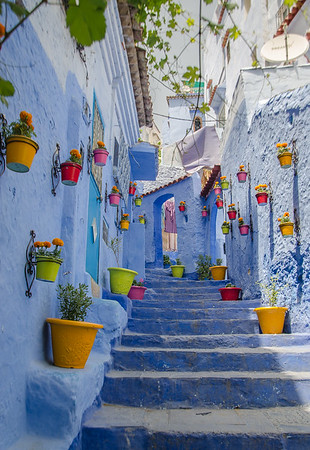 Blue painted alley lined with flower pots,, Chefchaouene