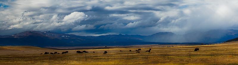 Stormy Plains