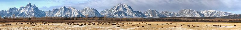 Buffalo Landscape