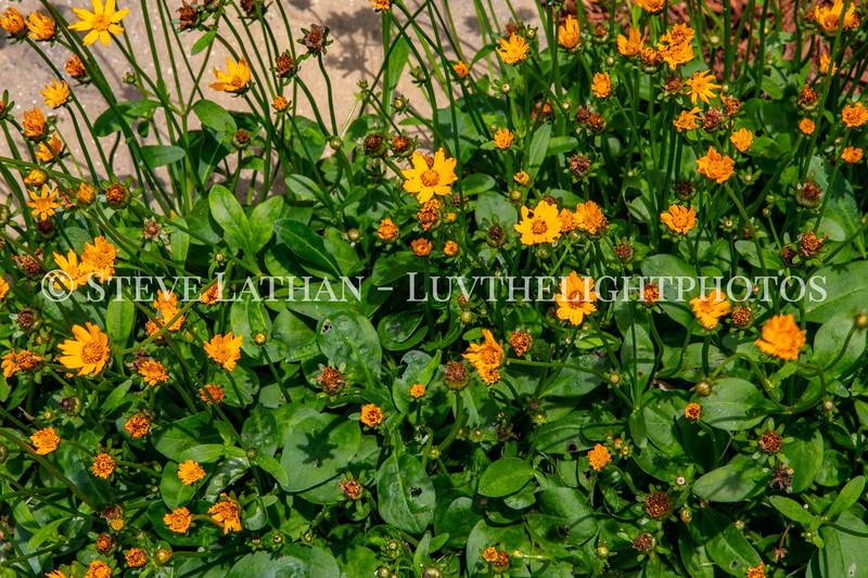 Garden53.jpg