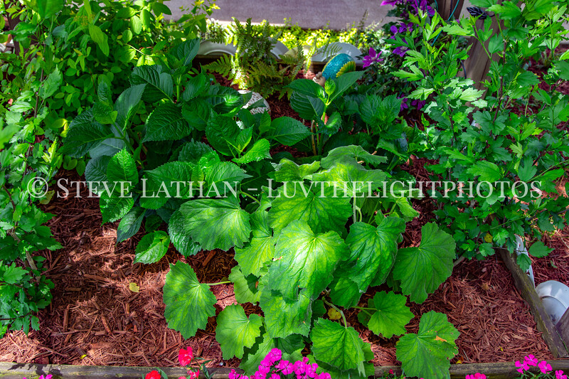 Garden51.jpg