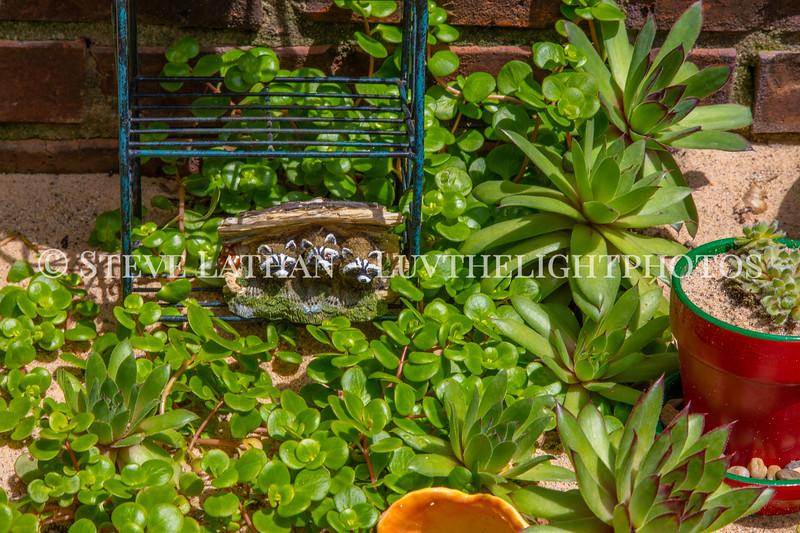 Garden32.jpg