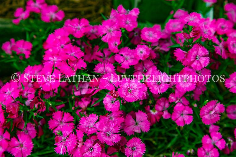 Garden45.jpg