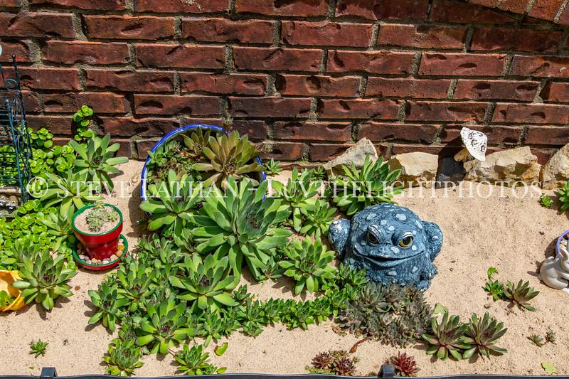 Garden34 copy.jpg