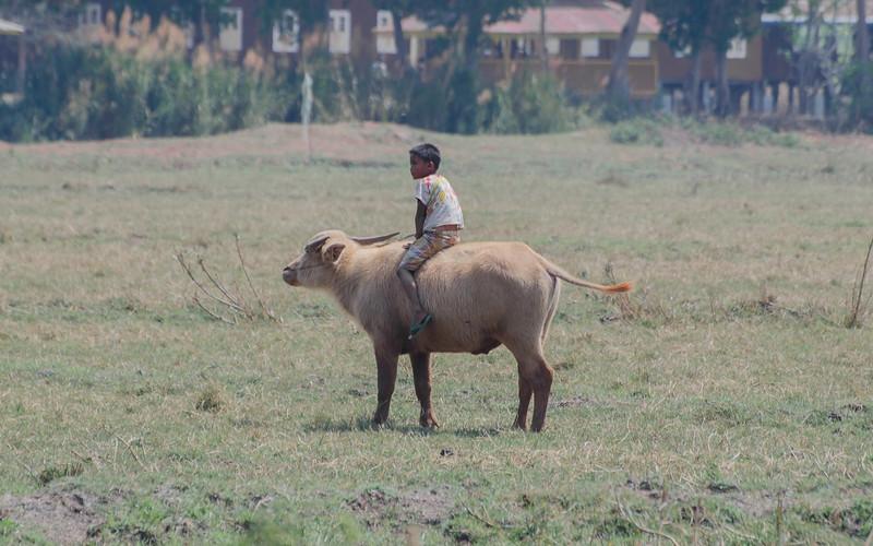Boy riding an ox