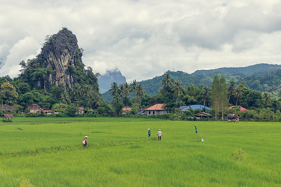 Rice Fields and mountains, Vang Vieng