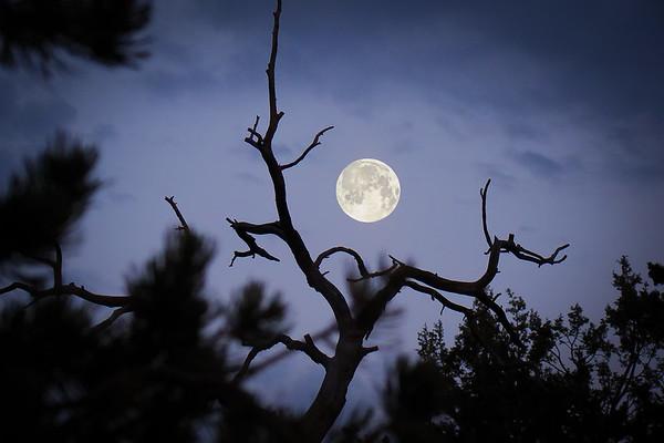 Hunting moon through the woods at Grand Canyon. South Rim - Arizona, USA