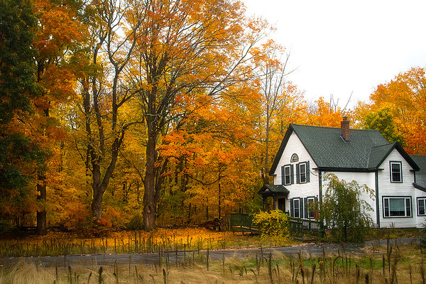 Fall Foliage in Boston, MA