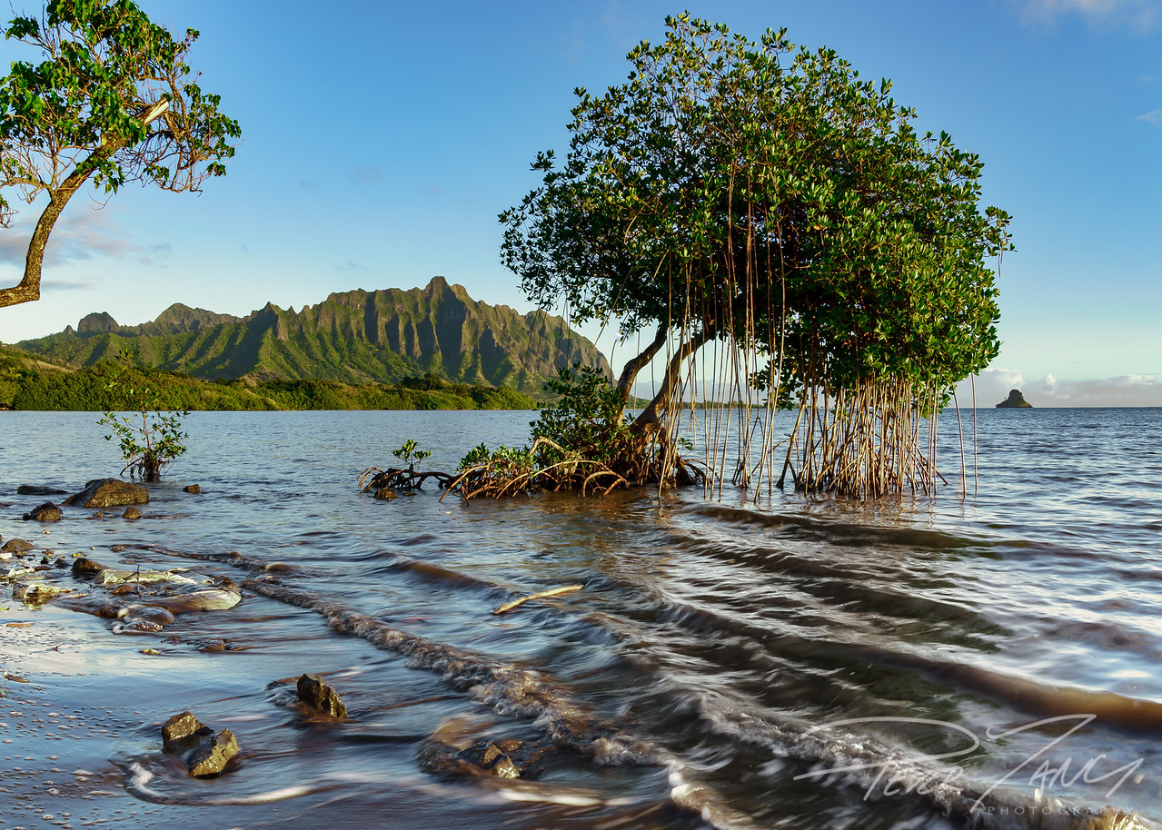 Trees of Waikane