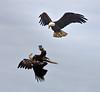 Eagle acrobatics