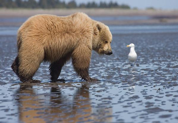 A Bear and A Gull