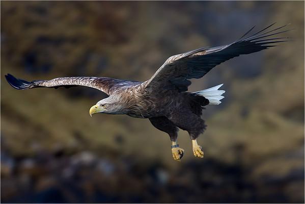 Skye Sea Eagle