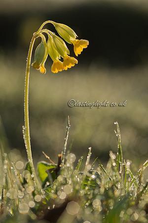 Spring Greens 3