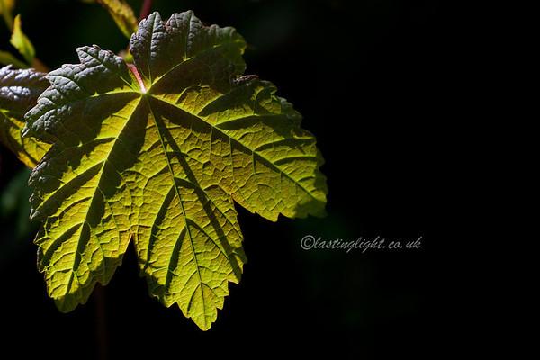 Spring Greens 16