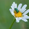 Spring Greens 6