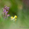 Spring Greens 26