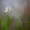 Spring Greens 17