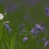 Spring Greens 25