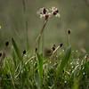 Spring Greens 24