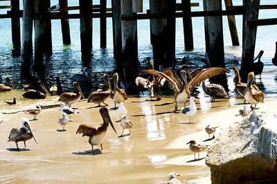 Hanford Pier, Port San Luis, CA