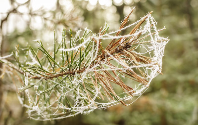 A web of ice