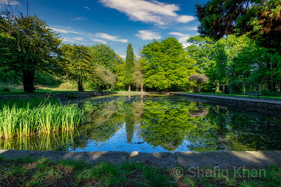 Lily Pond at Witton Park, Blackburn, Lancashire, UK