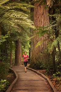 Whakarewarewa Forest, Rotarua, North Island, New Zealand: Who would have thought there would be a stand of California Coastal Redwoods in the middle of the North Island of New Zealand.