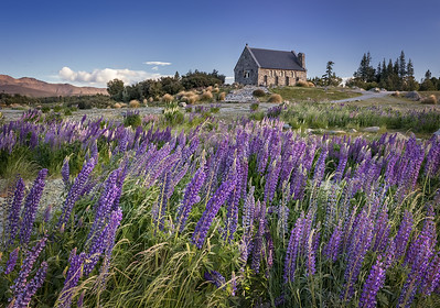 Lake Tekapo, South Island, New Zealand: The Church of the Good Shepherd looks lovely in the springtime when the lupins are in bloom.