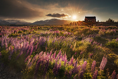 Lake Tekapo, South Island, New Zealand: The Church of the Good Shepherd at sunrise.