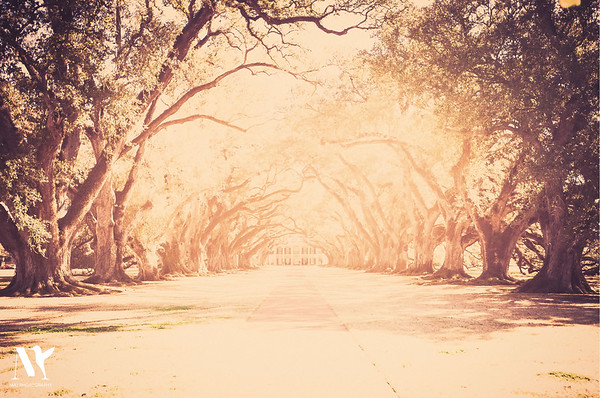 Oak Alley (Over Exposed)