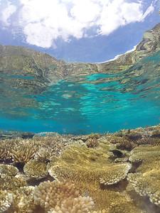 Coral gardens of Lifou