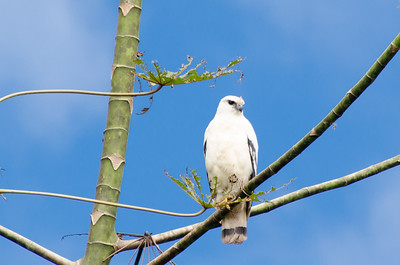 White Hawk, Rio San Juan