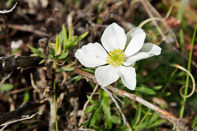Denali, Alaska A wildflower in Denali National Park and Preserve.