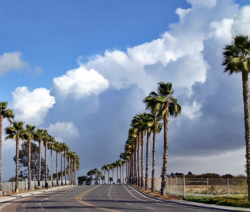 Palm Tree Lane