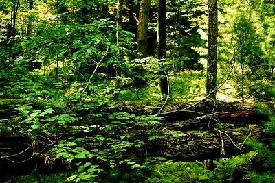 Forest in Georgia.