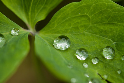 Detail on a leave with early morning tear drops.