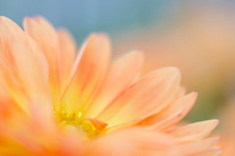 Soft focus flower