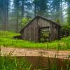 A Forrest Hut, Poland
