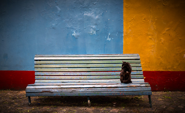 The cat from La Boca