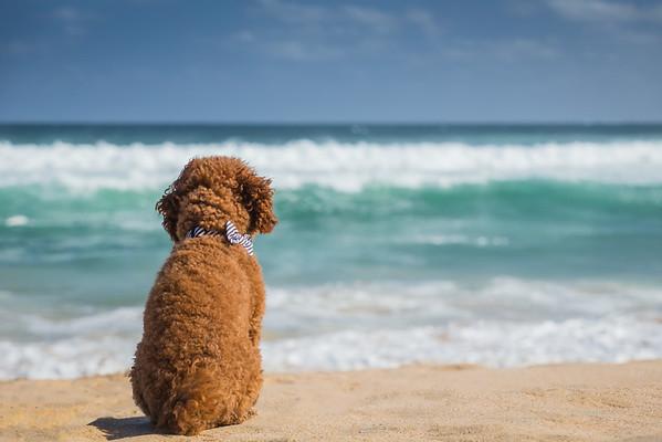 Jake watching the ocean