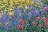 Wildflowers on Hurricane Ridge