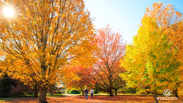 Nature flexing its colors