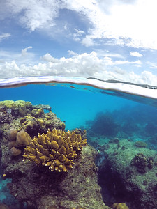 Coral gardens of Club Paradise